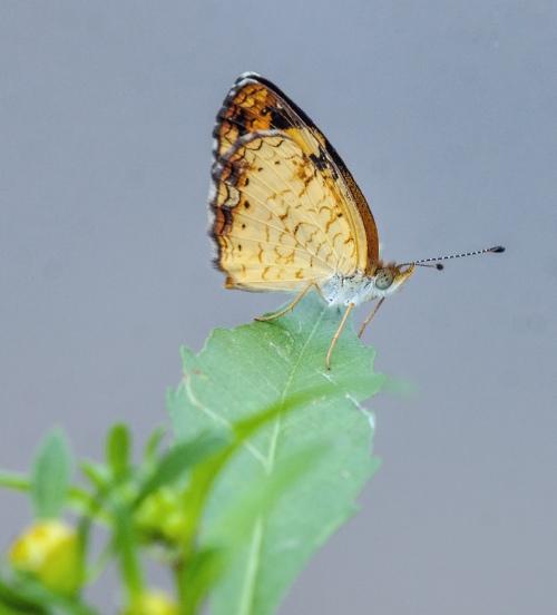 tiny butterfly