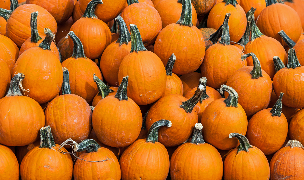 They also have an incredible variety of pumpkins of different colors,  including the multi-colored ones in the final photo. They are known by a  number of ...