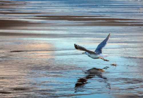 gull at dawn