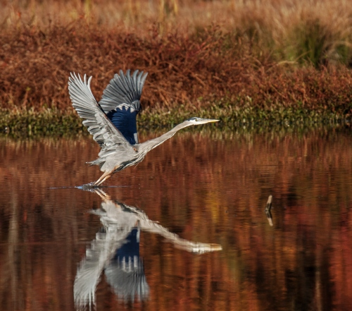 heron liftoff