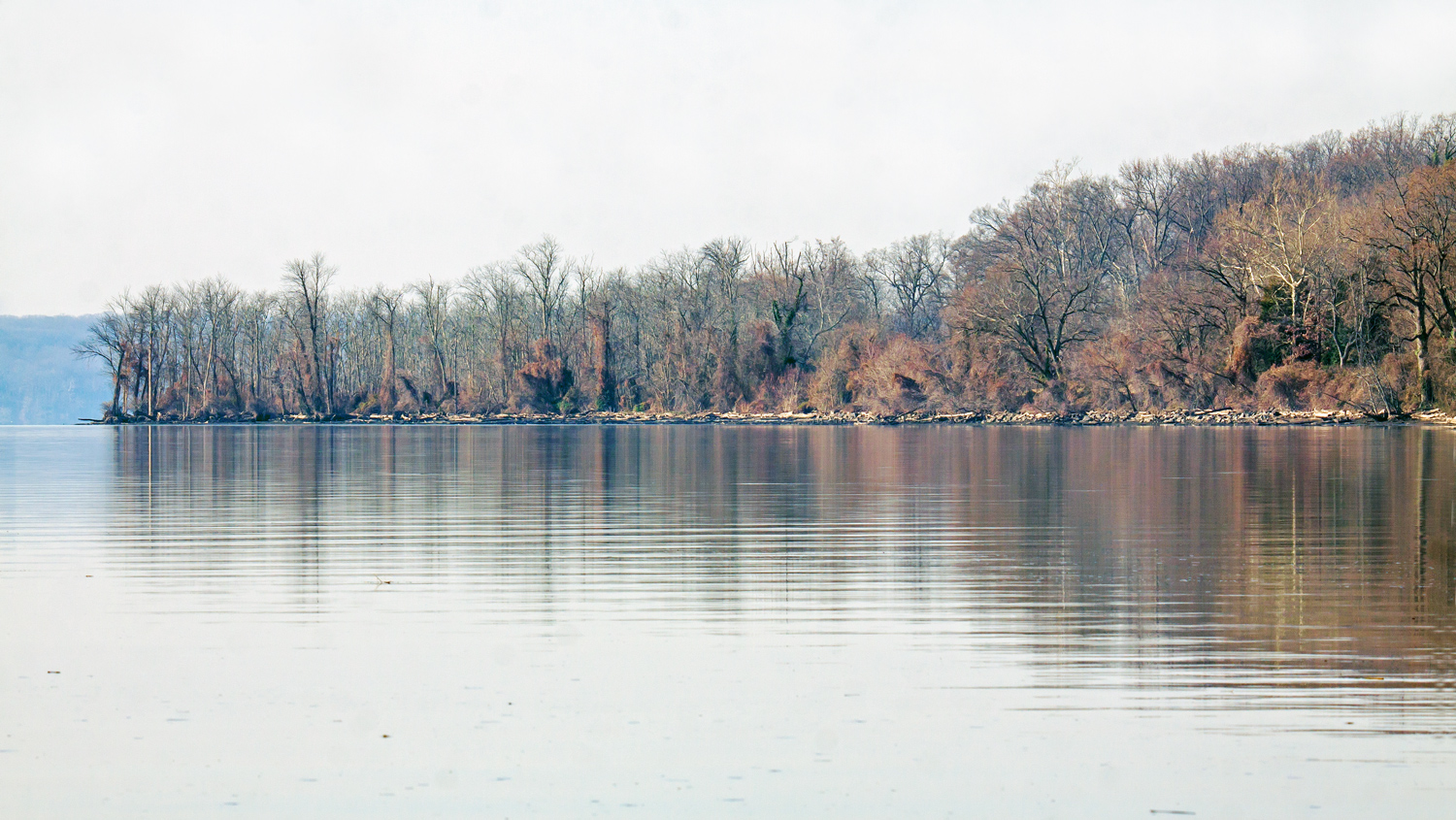 Early morning on the potomac river mike powell for Potomac river fishing