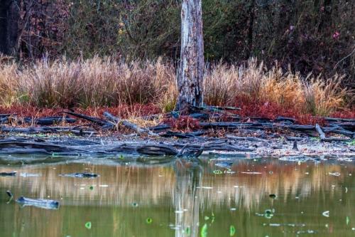 telephoto landscape