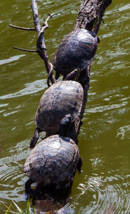 turtles in a tree