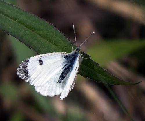 butterfly in Vienna