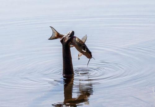 snake2_fish_blog