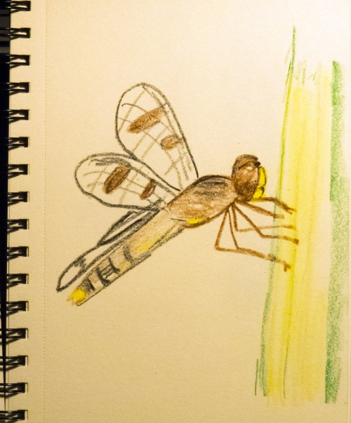 dragonfly crayon drawing