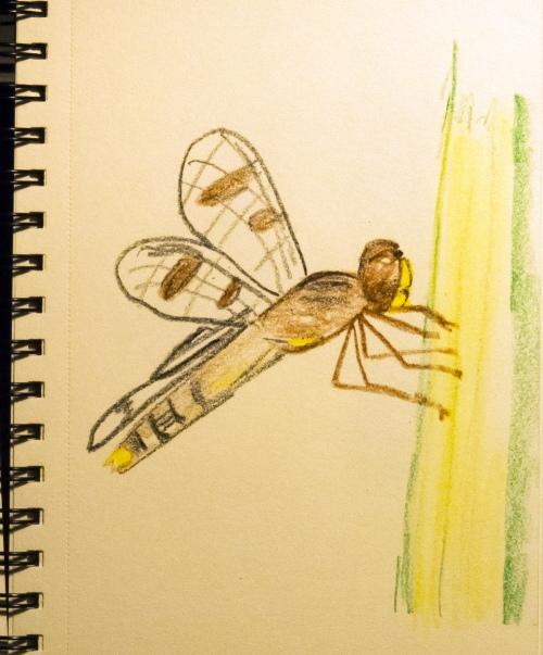 dragonfly crayon drawing