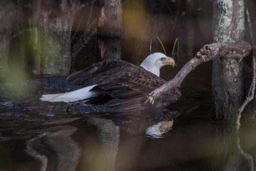 eagle resuce