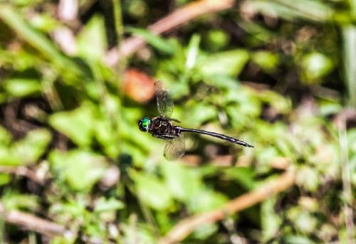 fine-lined emerald