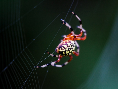 spider making web