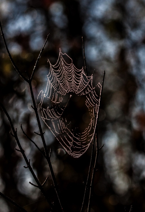 autumn web