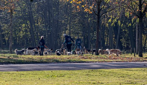 Dogs at the Bois de Boulogne