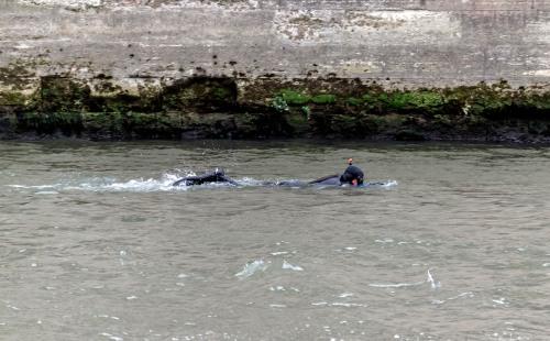 swimming in the Seine