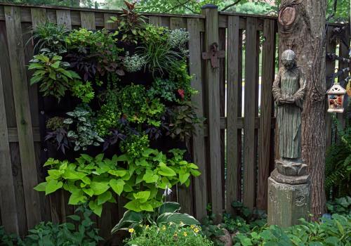 cindy's garden