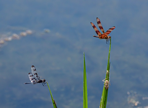 Halloween Pennant and Banded Pennant
