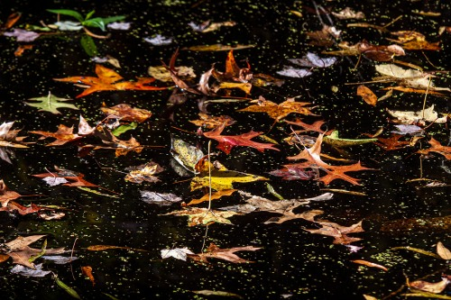 floating fall foliage